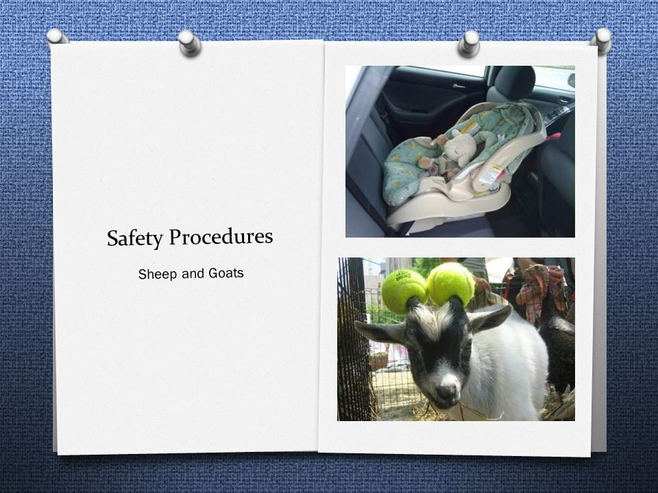 Safety Procedures Sheep and Goats