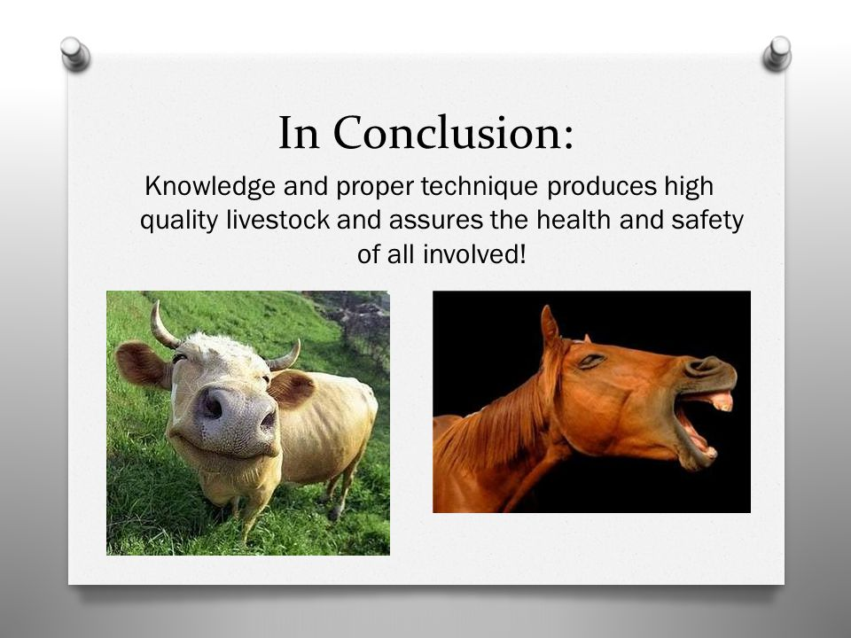 In Conclusion: Knowledge and proper technique produces high quality livestock and assures the health and safety of all involved!