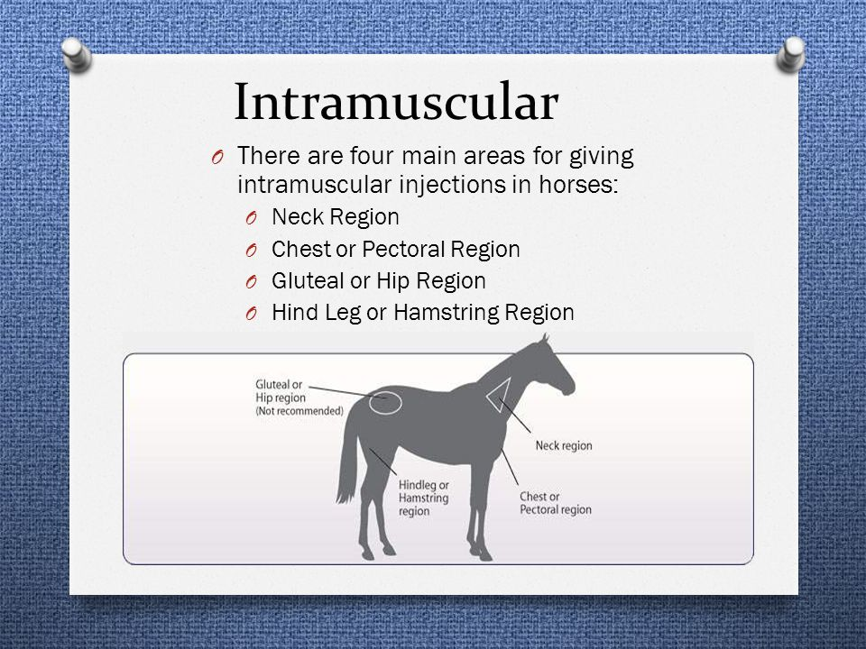 Intramuscular There are four main areas for giving intramuscular injections in horses: Neck Region.