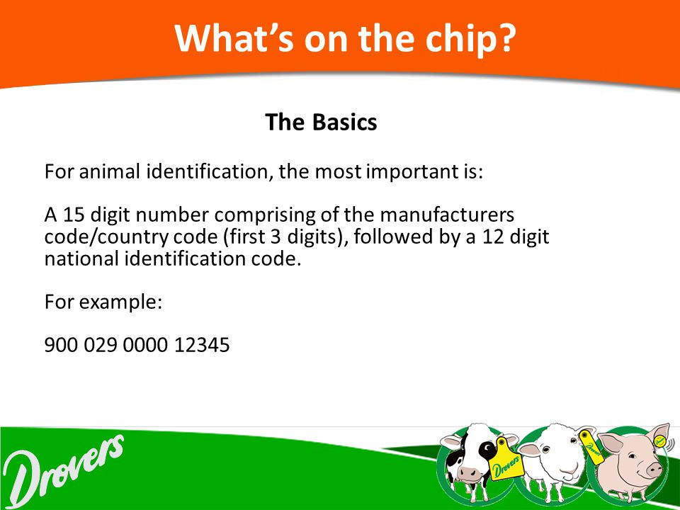 What's on the chip The Basics