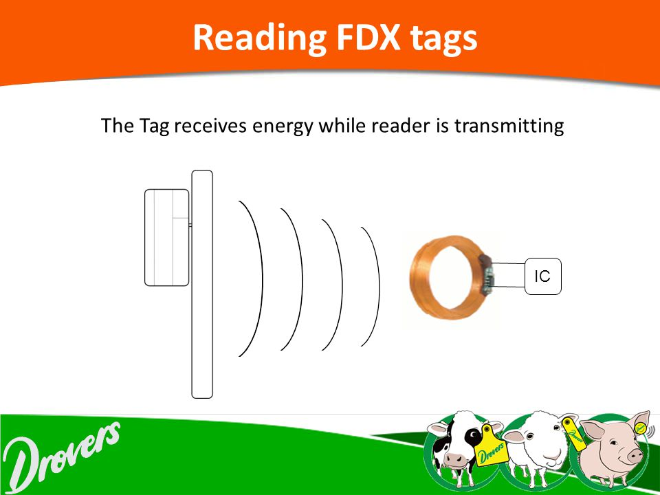 The Tag receives energy while reader is transmitting