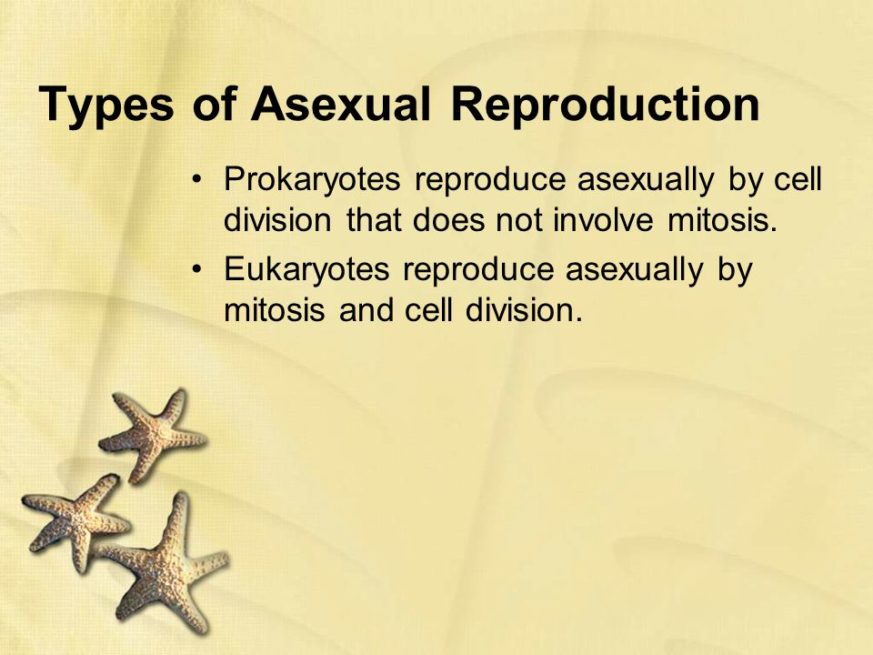 How do prokaryotic cells reproduce asexually