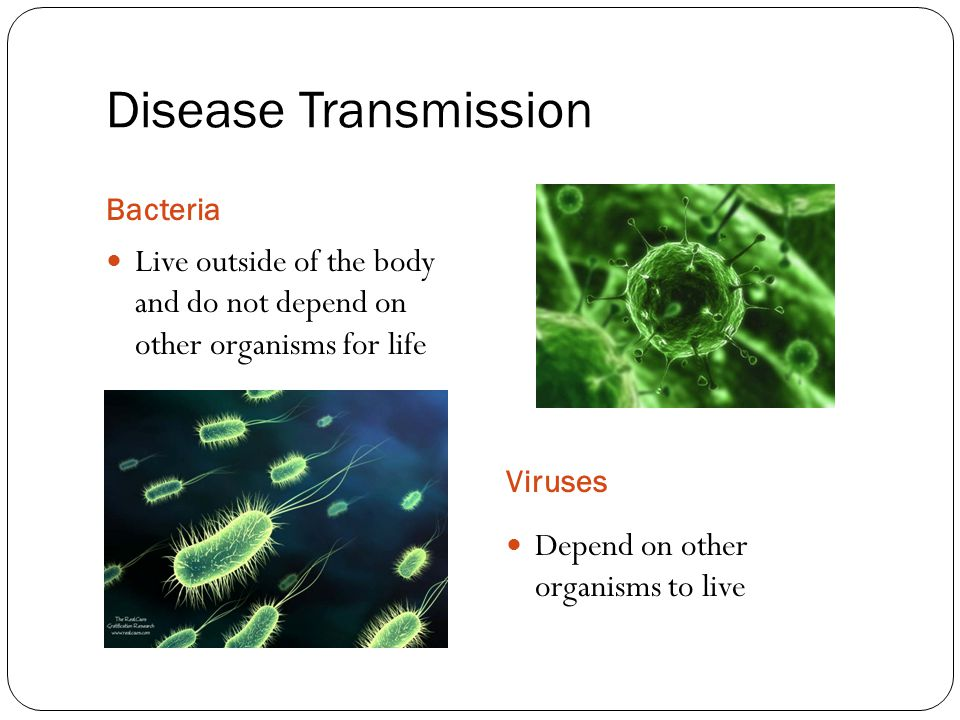 Disease Transmission Bacteria. Live outside of the body and do not depend on other organisms for life.