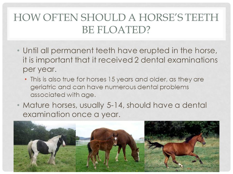 A Guide To Equine Dental Care Ppt Video Online Download