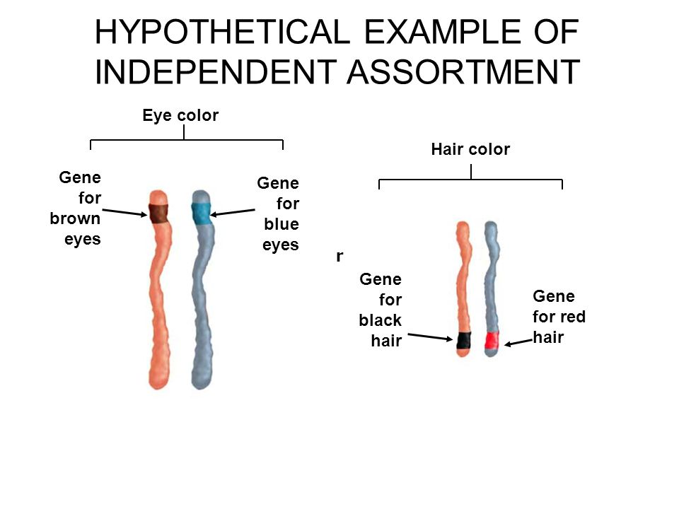 Patterns Of Gene Inheritance Ppt Video Online Download