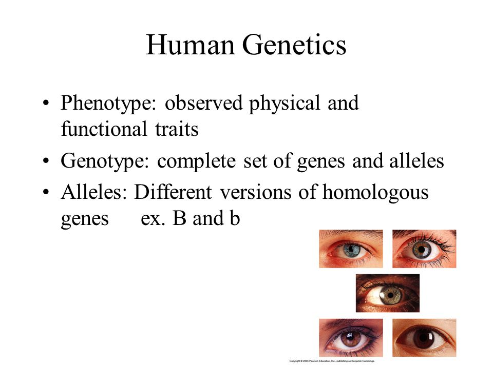 section 4 traits genes and alleles The main difference between allele and gene is, gene is a stretch of rna and dna and allele is present on chromosome as a fixed spot allele as chromosomes are present in pairs, therefore, organisms have two alleles for each gene.