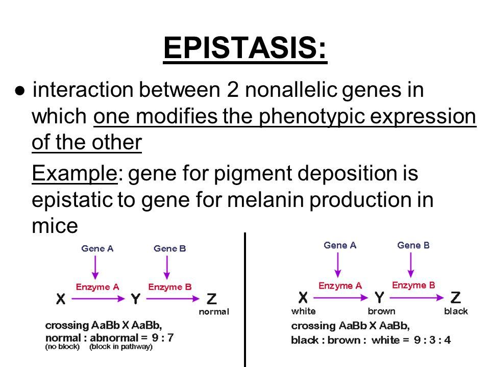 Notes Ch 14 Part 2 Extending Mendelian Genetics Ppt Video