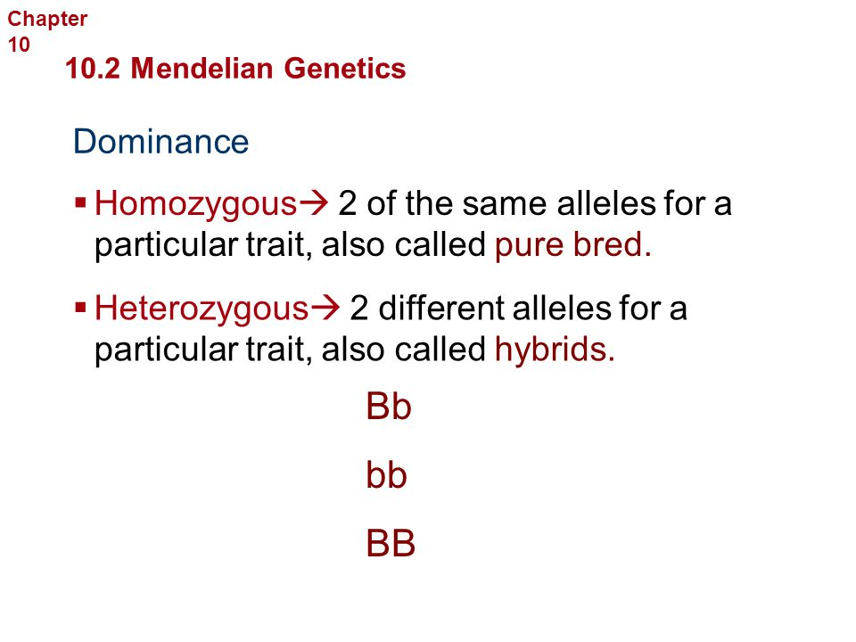 Section 2 mendelian genetics study guide chapter 10 answers study guide sexual reproduction and genetics english editable meiosis genetics array mendelian genetics ppt video online download rh slideplayer com fandeluxe Image collections