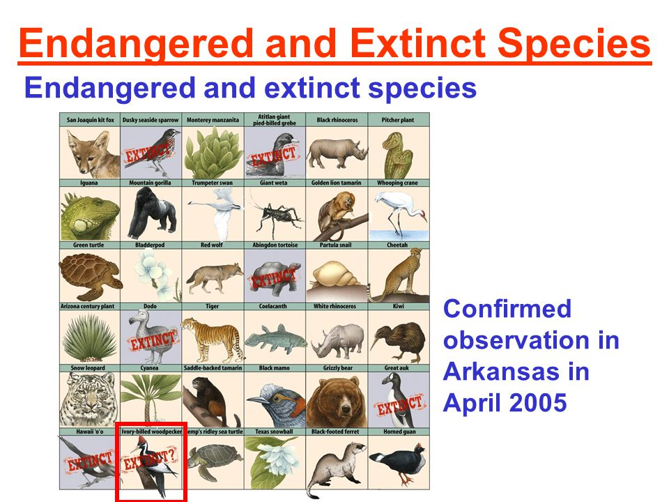 speech on endangered species An endangered species is a type of organism that is threatened by extinction species become endangered for two main reasons: loss of habitat and loss of genetic variation loss of habitat a loss of habitat can happen naturally dinosaurs, for instance, lost their habitat about 65 million years ago.