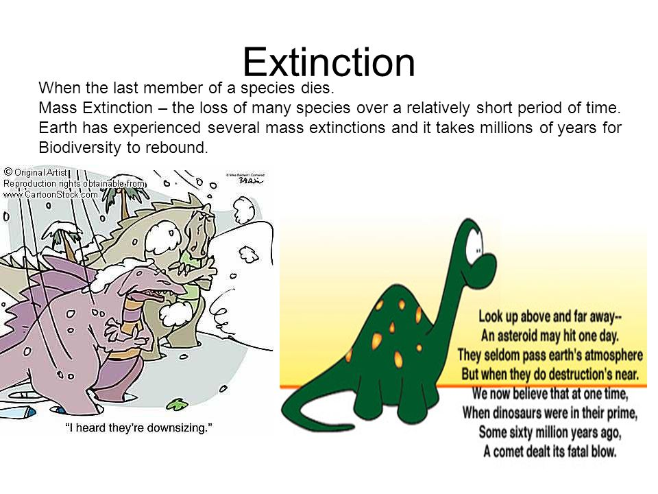 the history of earths mass extinctions essay Cretaceous extinction event causes, evidence, and effects on biodiversity the most significant event of the cretaceous era came at its end nearly 65 million years ago, the second most severe mass extinction in earth's history occurred.