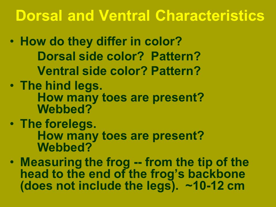 Frog External Anatomy. - ppt download