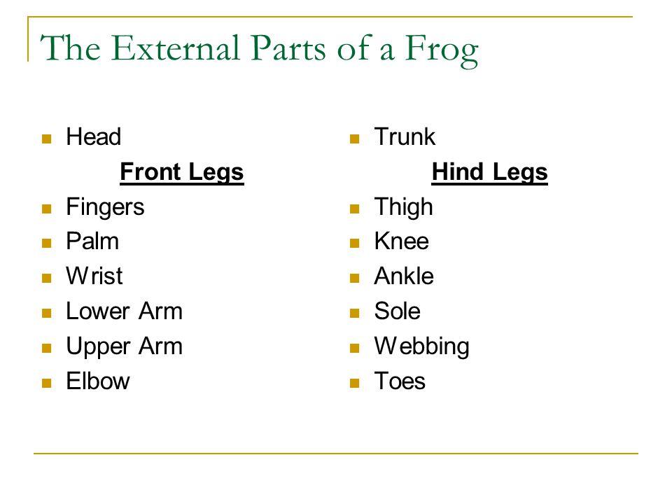 Amphibian Anatomy Ppt Video Online Download