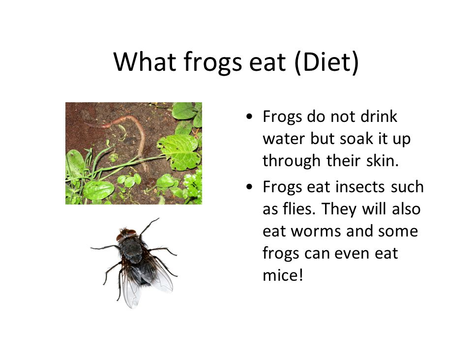 What Do Worms Eat And Drink