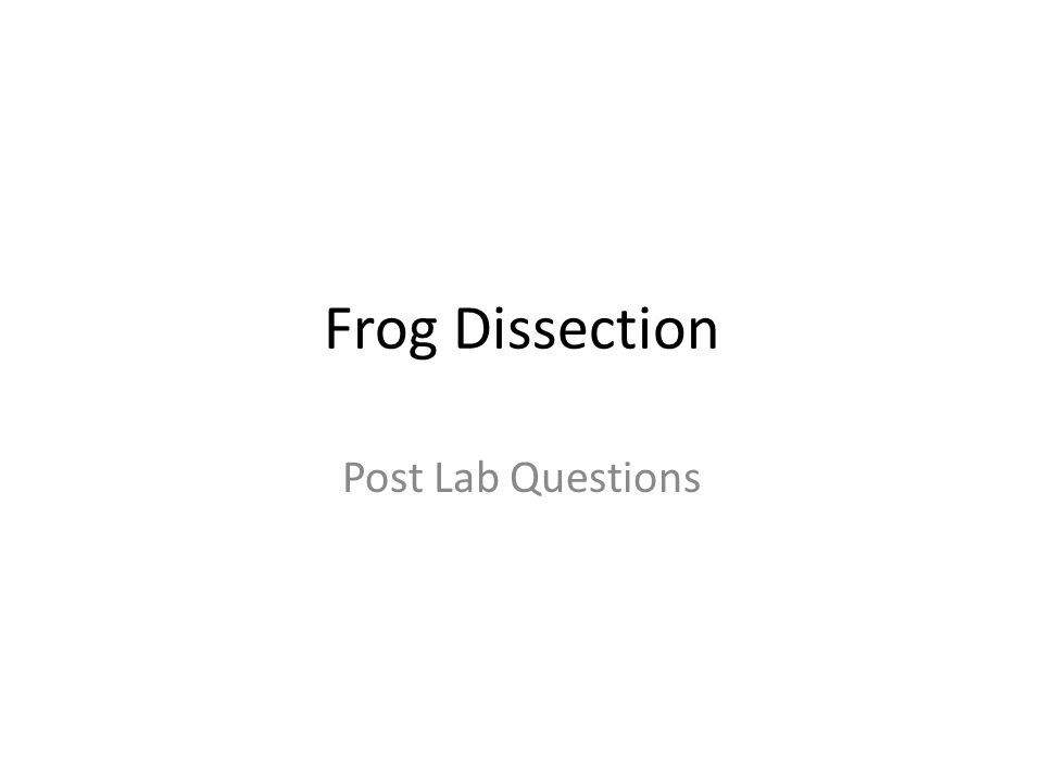Frog Dissection Post Lab Questions Ppt Download. 1 Frog Dissection Post Lab Questions. Worksheet. Frog Dissection Worksheet Post Lab Questions At Clickcart.co