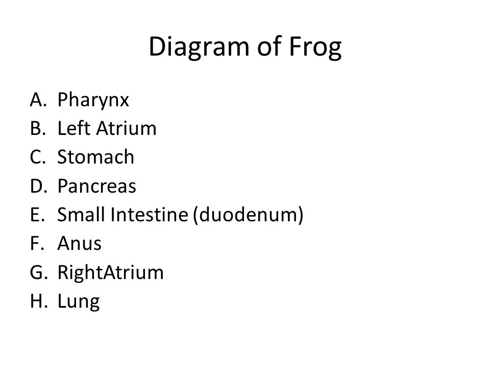 Frog Dissection Post Lab Questions  - ppt download