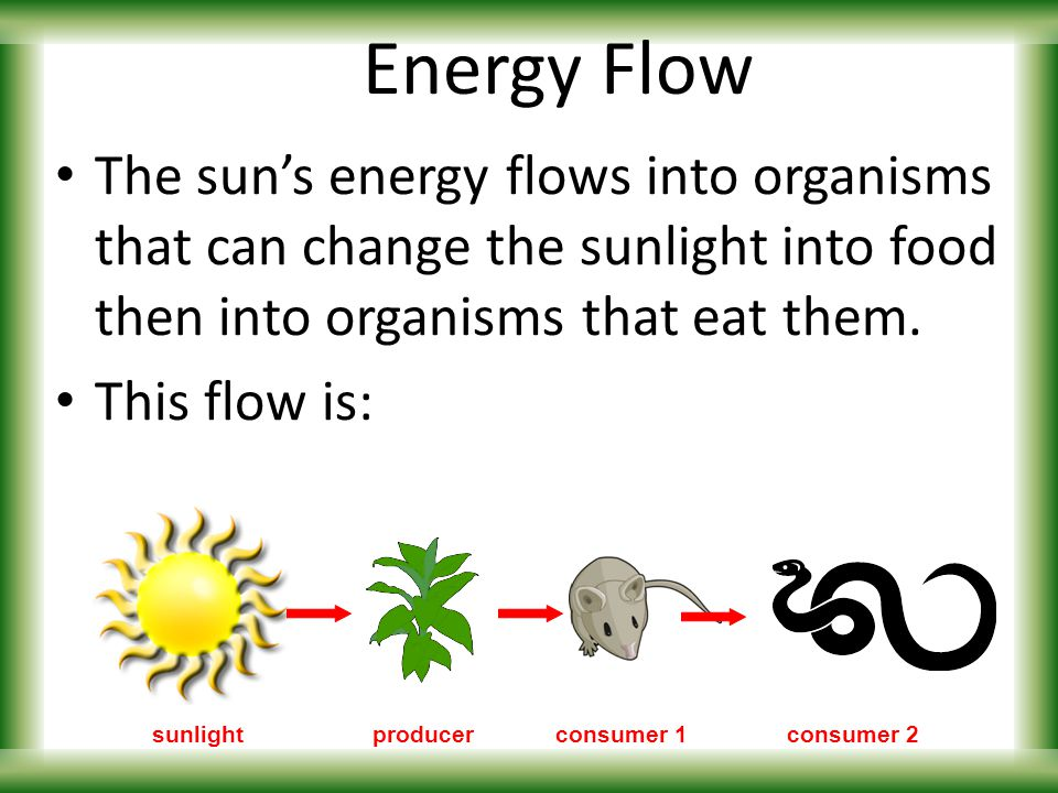 energy flow among organisms of a 3–2 energy flow key concepts • where does the energy for life processes come from • how does energy flow through living systems • how efficient is the transfer of energy among organisms in an ecosystem vocabulary autotroph • producer photosynthesis chemosynthesis • heterotroph consumer • herbivore carnivore • omnivore.