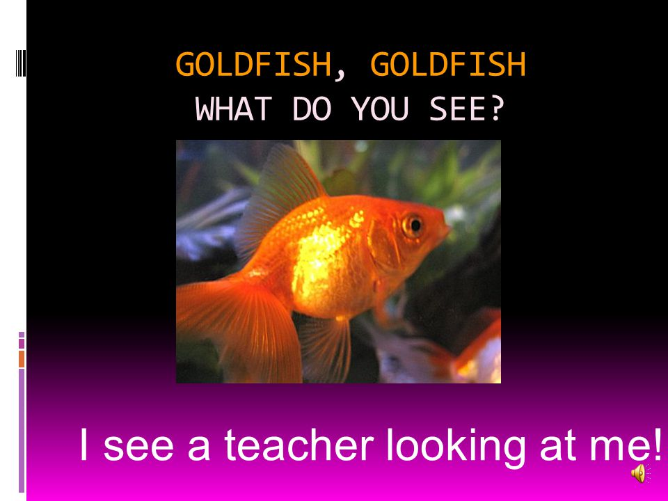 GOLDFISH, GOLDFISH WHAT DO YOU SEE