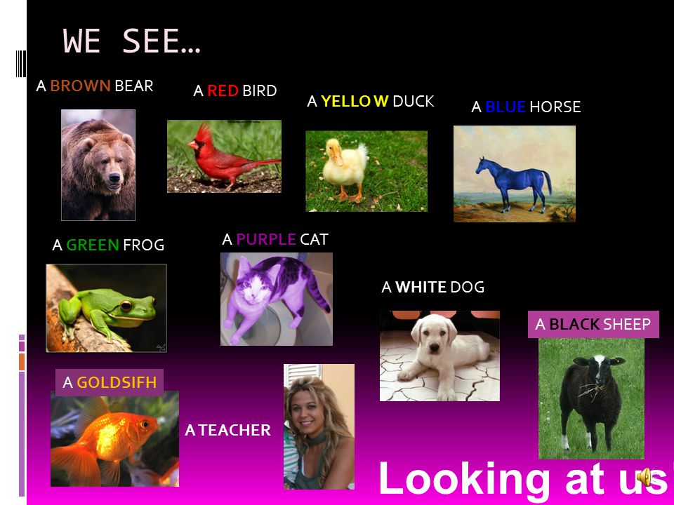 Looking at us!!!! WE SEE… A BROWN BEAR A RED BIRD A YELLO W DUCK