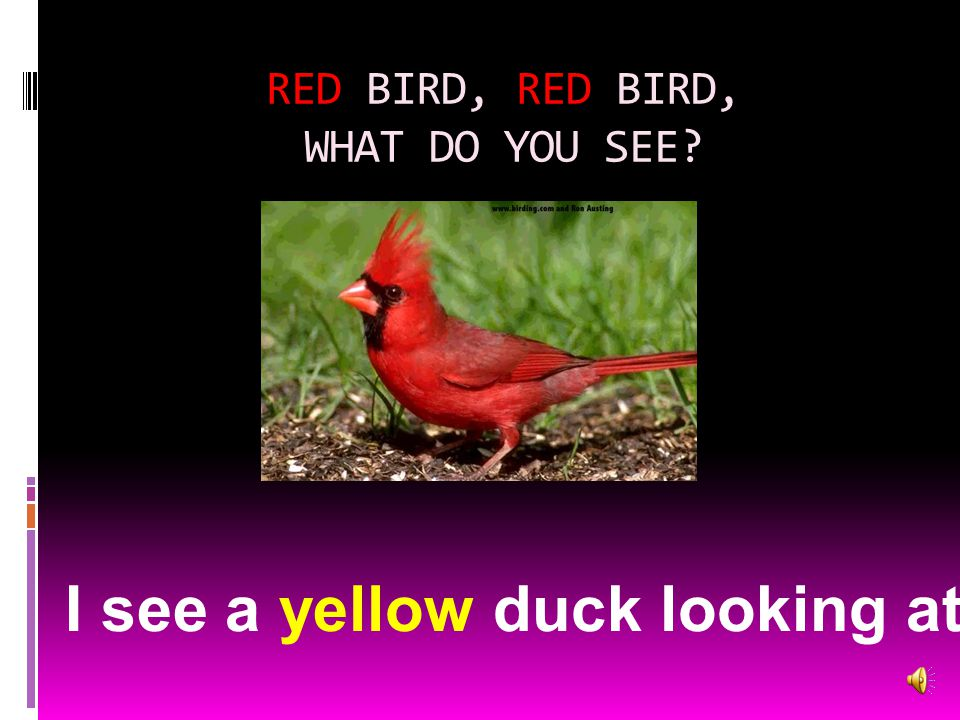 RED BIRD, RED BIRD, WHAT DO YOU SEE