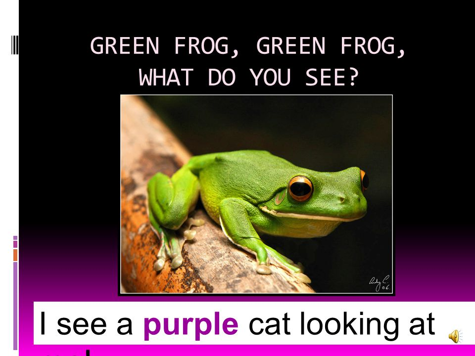 GREEN FROG, GREEN FROG, WHAT DO YOU SEE