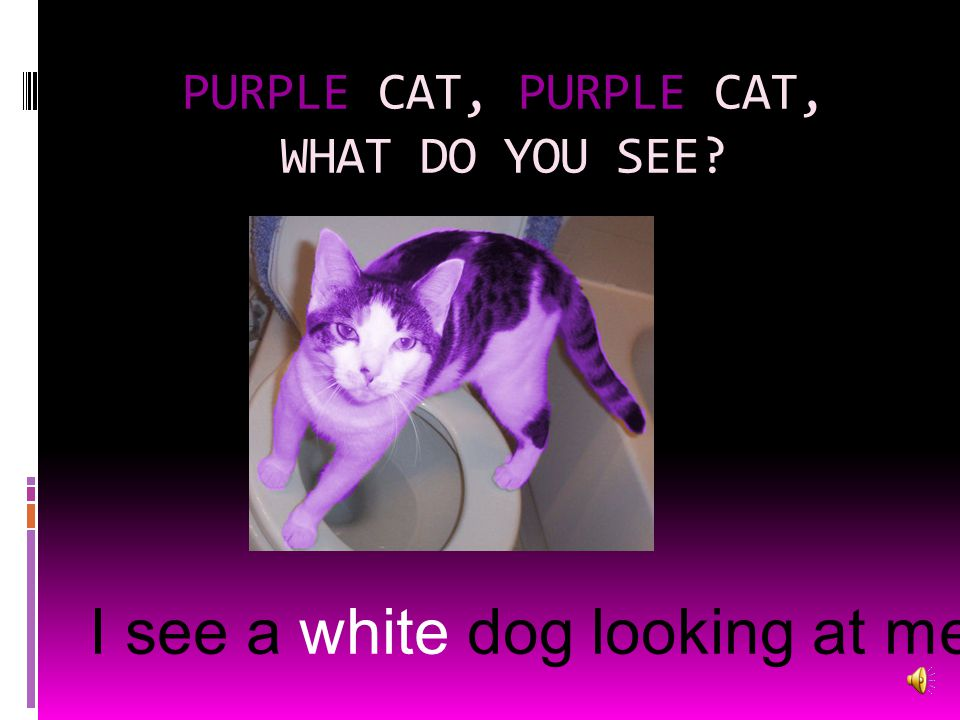 PURPLE CAT, PURPLE CAT, WHAT DO YOU SEE