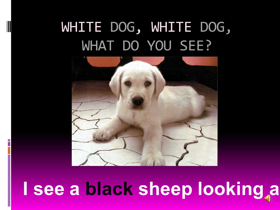 WHITE DOG, WHITE DOG, WHAT DO YOU SEE