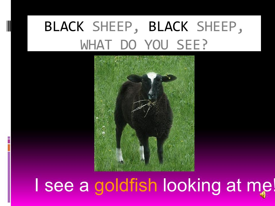 BLACK SHEEP, BLACK SHEEP, WHAT DO YOU SEE