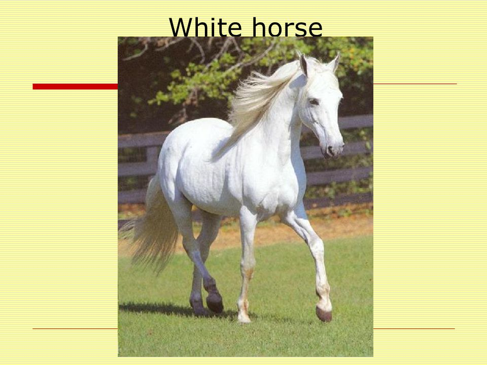 william saroyan the summer of the beautiful white horse