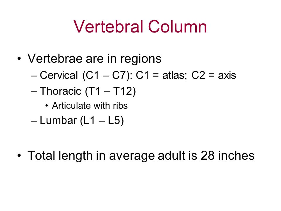 Vertebral Column Vertebrae are in regions