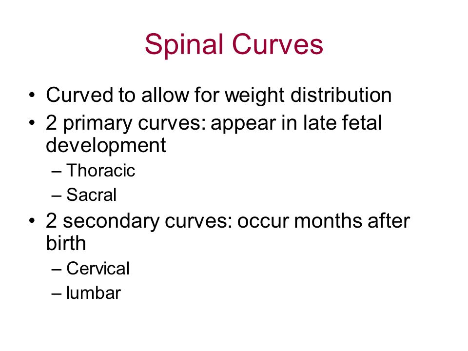 Spinal Curves Curved to allow for weight distribution