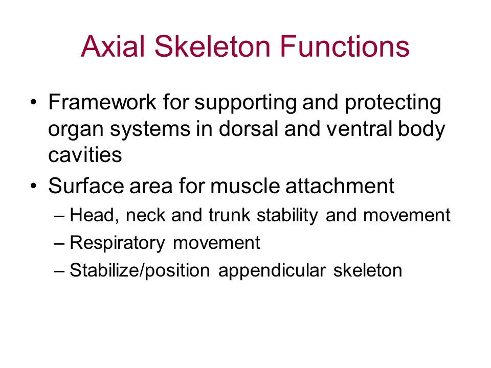 Axial Skeleton Functions