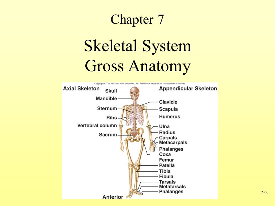 Anatomy and Physiology, Sixth Edition - ppt download