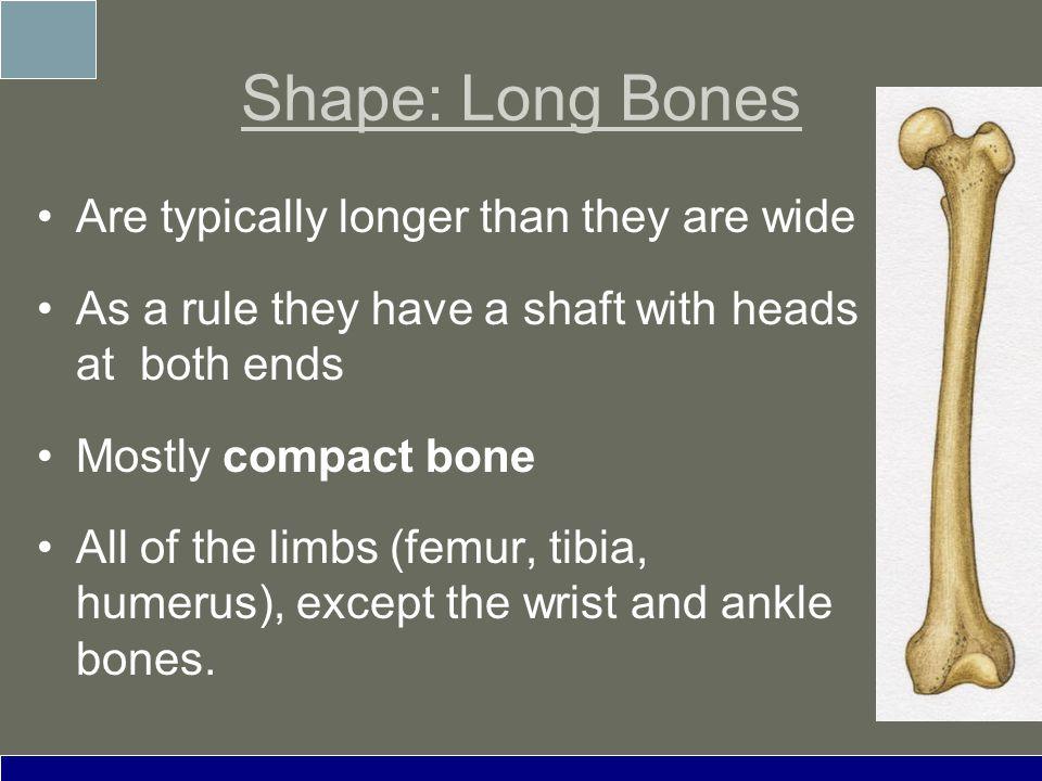 The Skeletal System Ppt Video Online Download