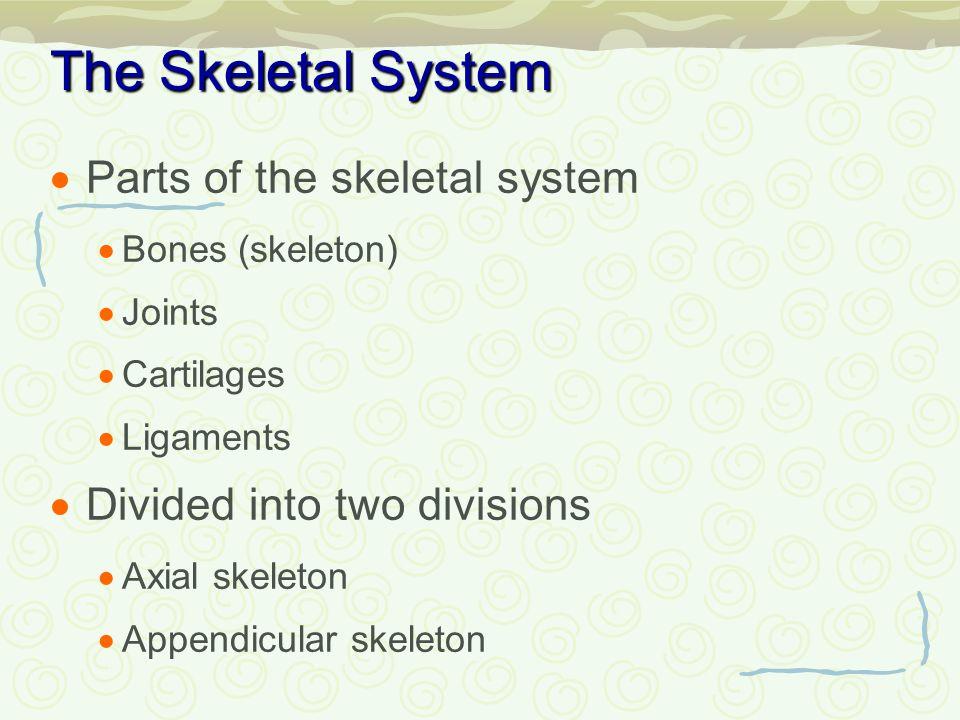 Chapter 5 The Skeletal System Ppt Video Online Download
