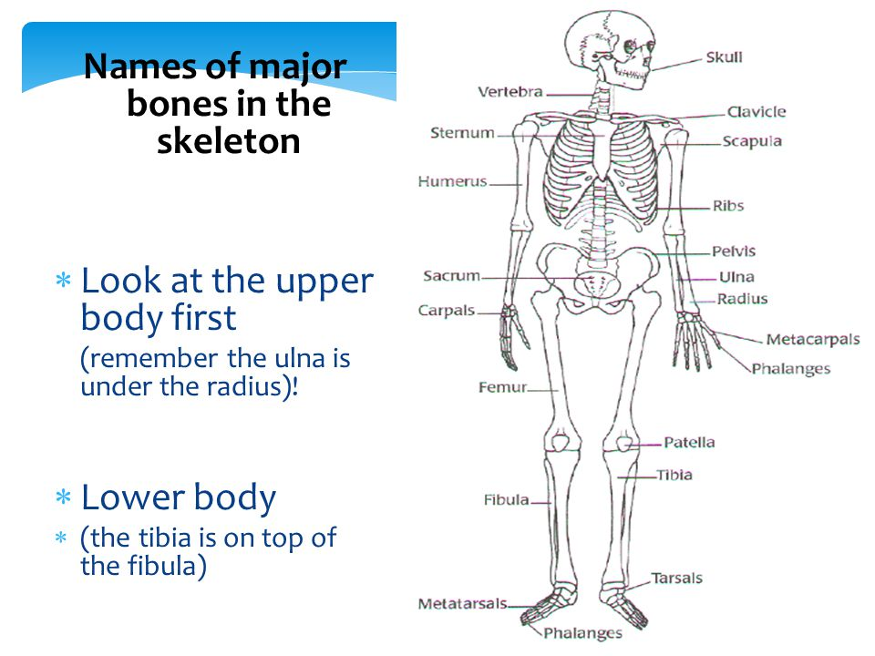 Function Names Of Bones Types Of Bones Bones And Sport Ppt Video