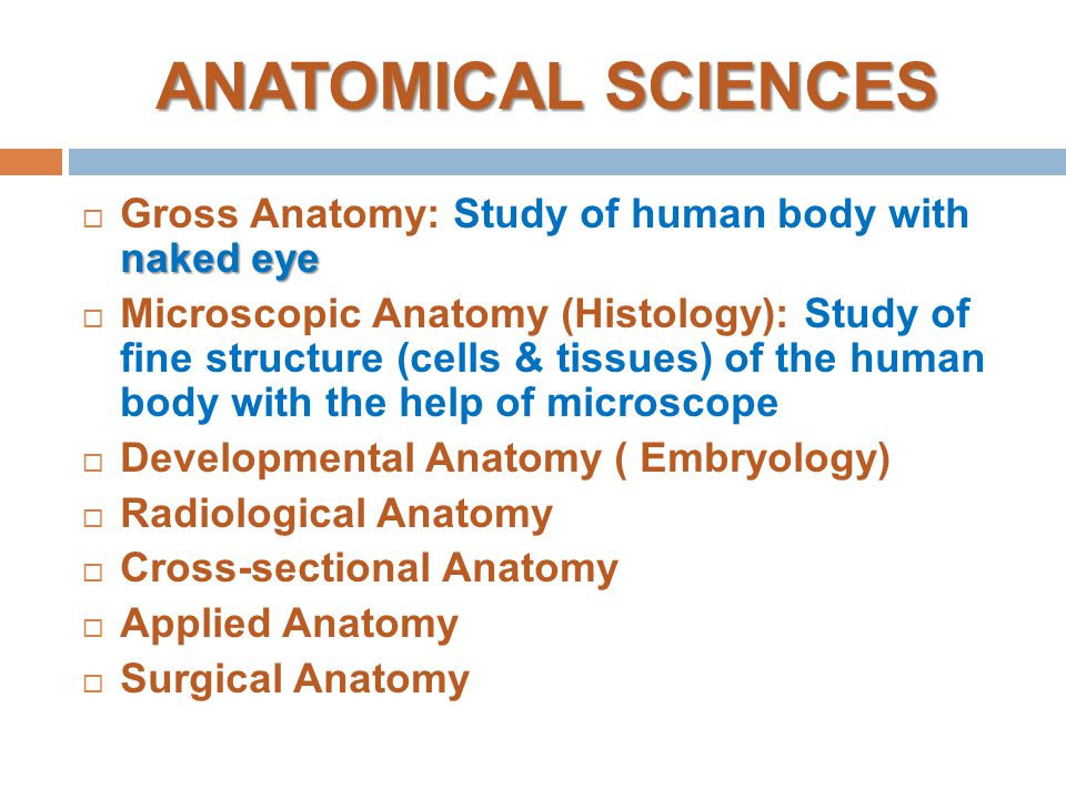Introduction to anatomy skeletal system: bone - ppt video online ...