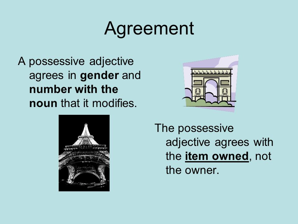 Agreement A possessive adjective agrees in gender and number with the noun that it modifies.