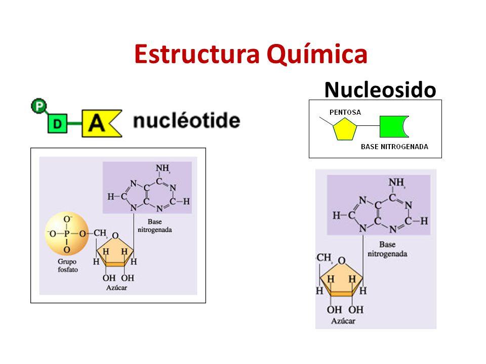 estructura f u00edsica y qu u00edmica de los  u00e1cidos nucleicos