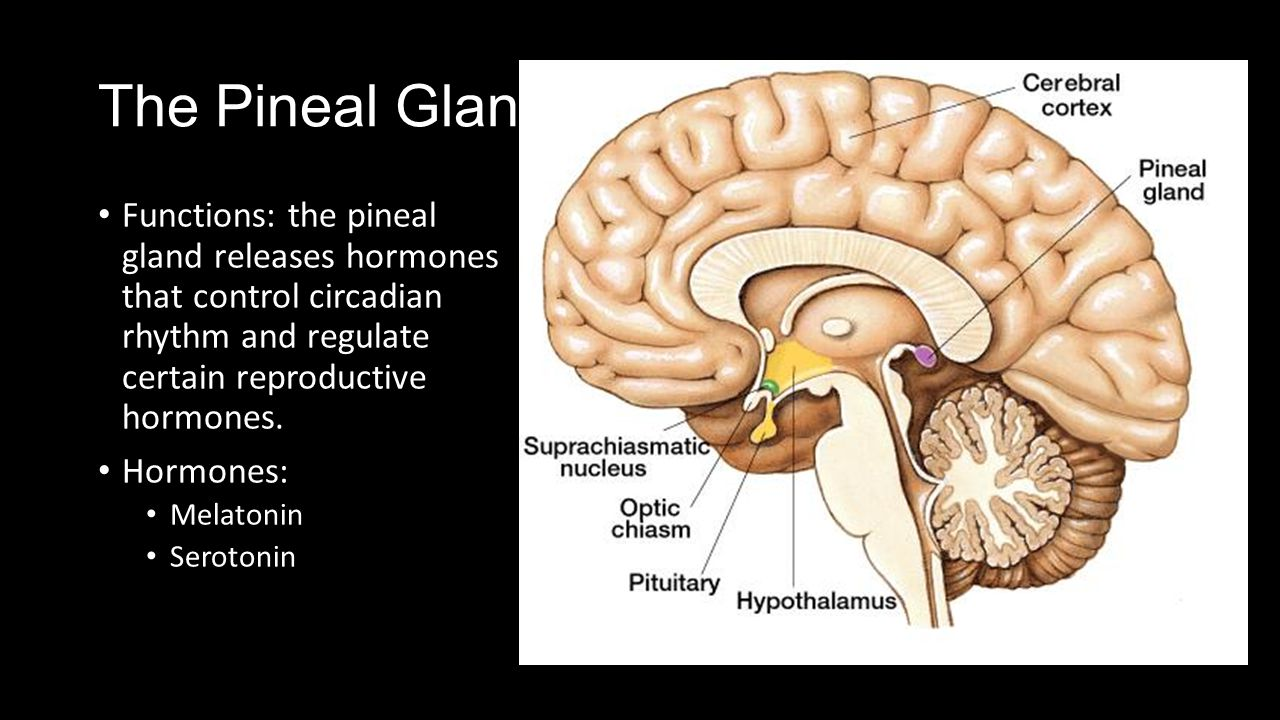 The Pineal Gland And Pancreas Ppt Video Online Download