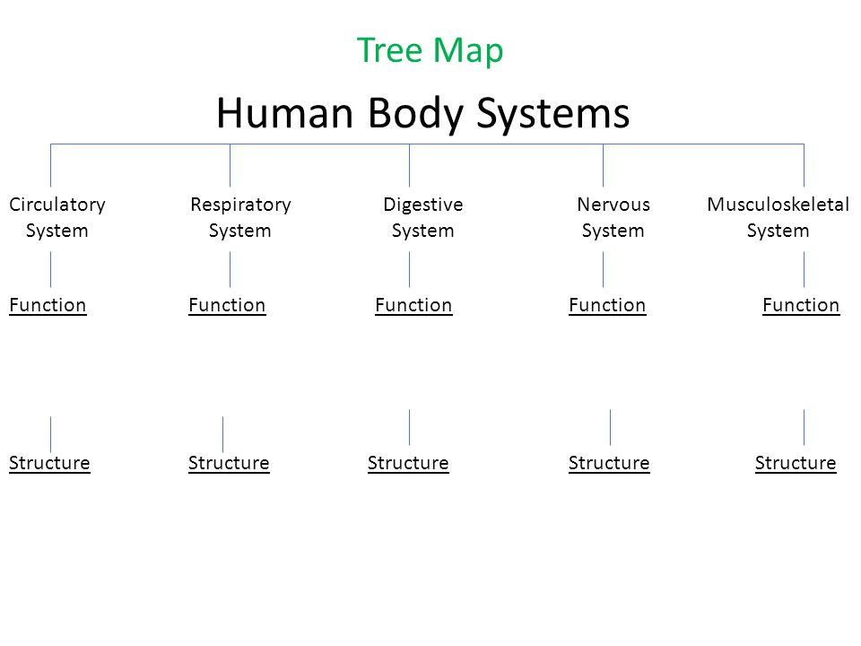 Human Body Systems Project Ppt Video Online Download