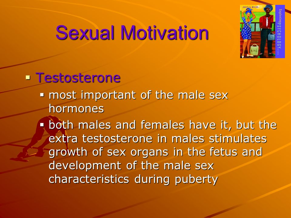 Sexual Motivation Testosterone most important of the male sex hormones