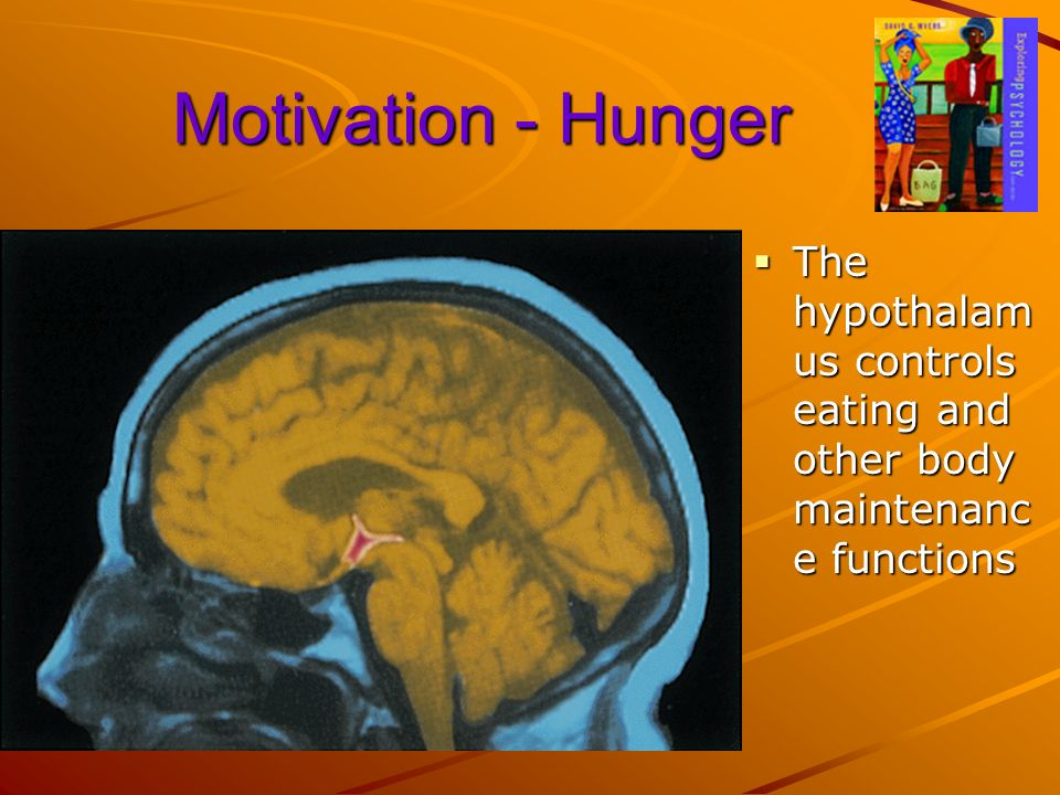 Motivation - Hunger The hypothalamus controls eating and other body maintenance functions