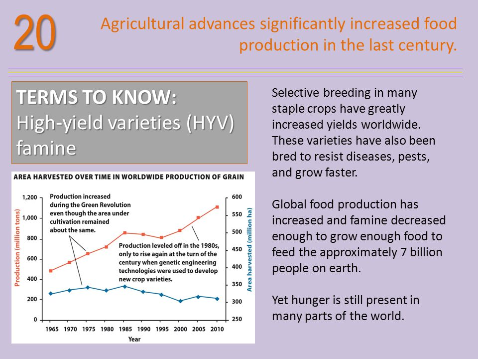 20 TERMS TO KNOW: High-yield varieties (HYV) famine