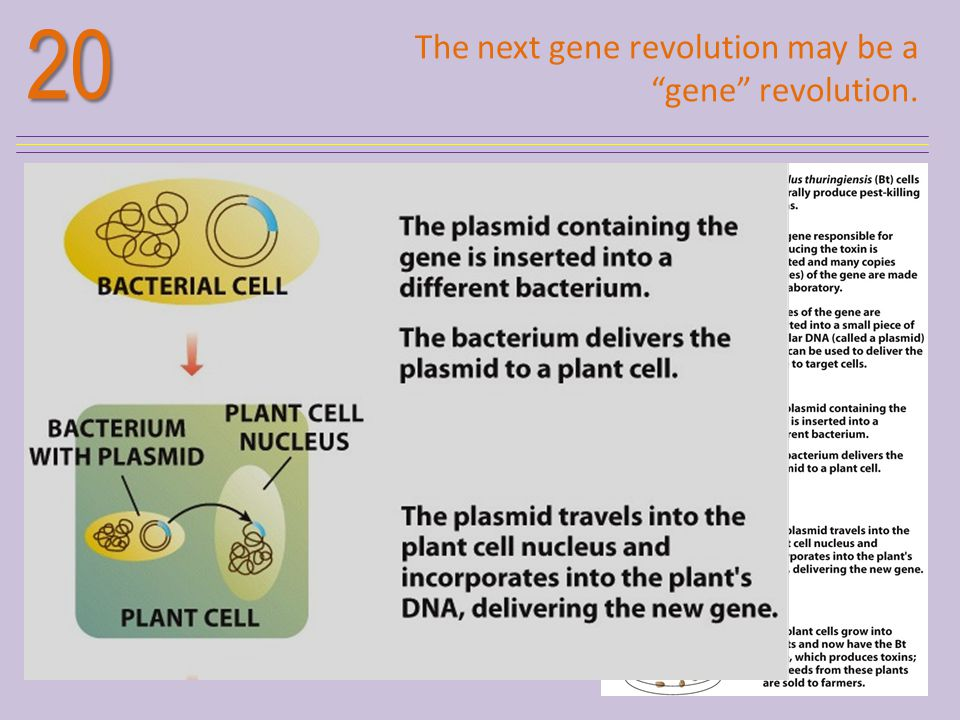 20 The next gene revolution may be a gene revolution.