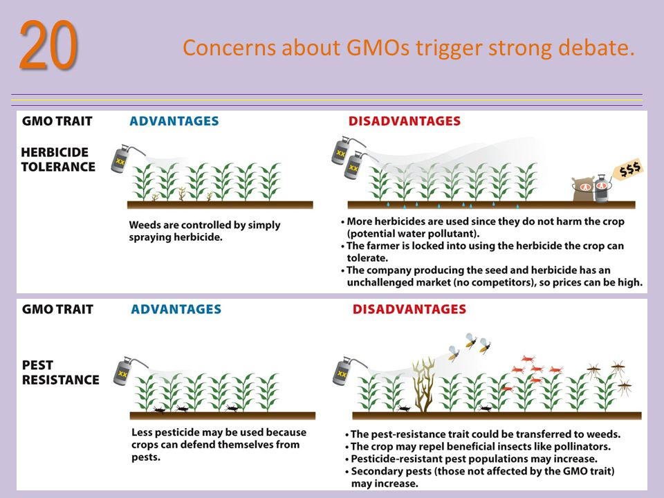 20 Concerns about GMOs trigger strong debate.