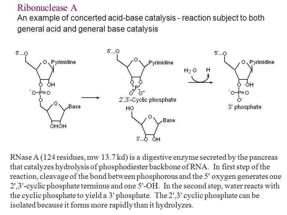 acid base enzyme catalysis