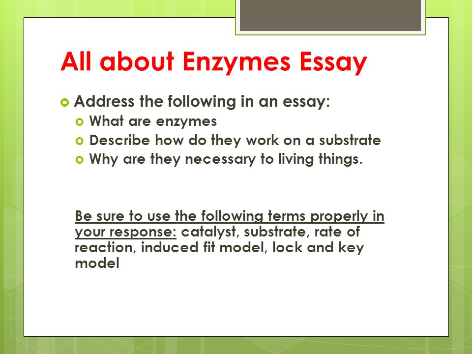 All about Enzymes Essay