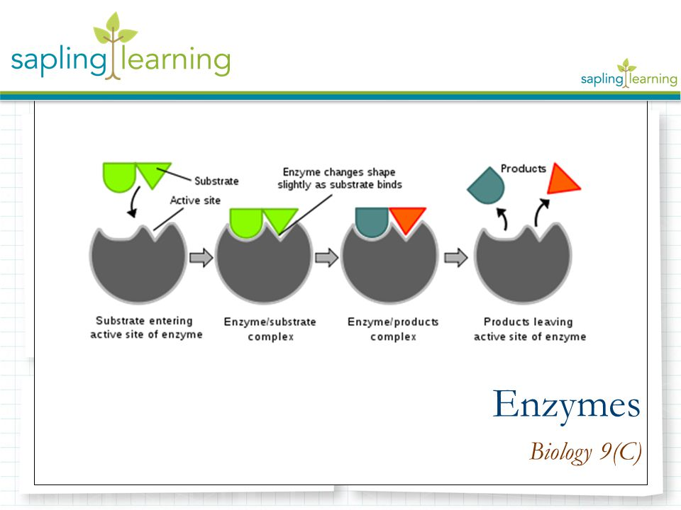 Enzymes Biology 9(C)