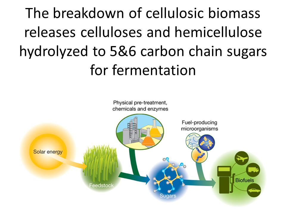 The breakdown of cellulosic biomass releases celluloses and hemicellulose hydrolyzed to 5&6 carbon chain sugars for fermentation