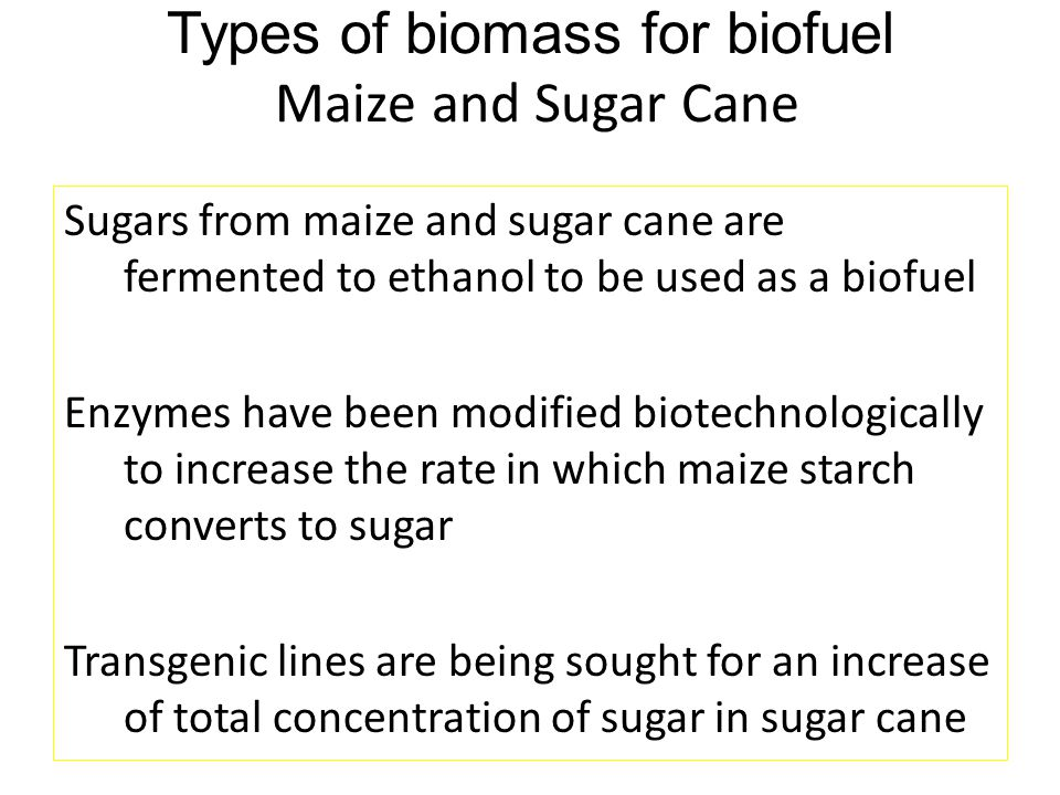 Types of biomass for biofuel Maize and Sugar Cane